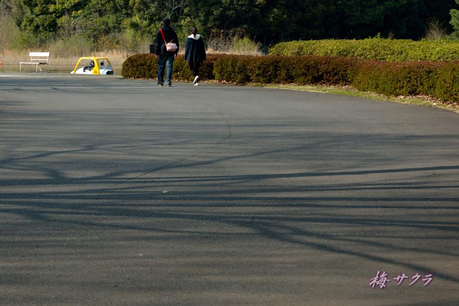 昭和記念公園1(1)変更済