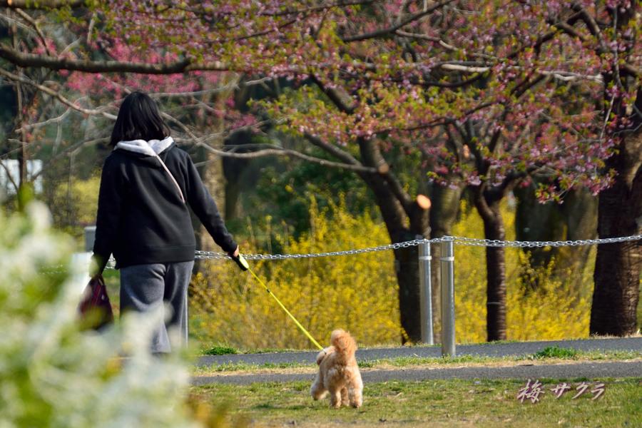 昭和記念公園1(13)変更済