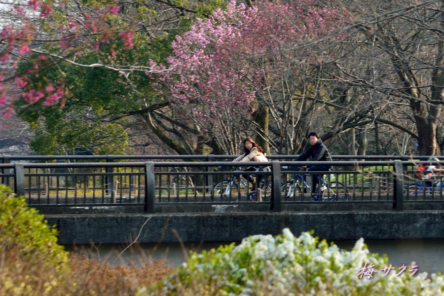 昭和記念公園2(6)変更済