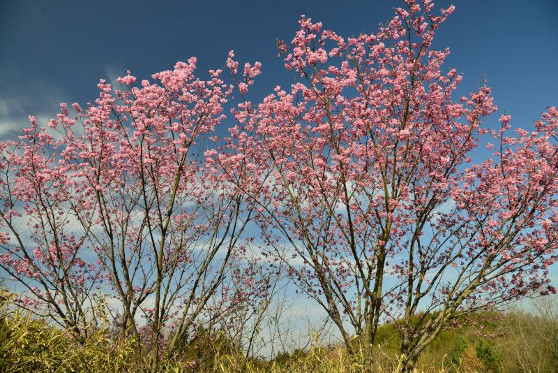 「春・里山」5 (香川県香川町)
