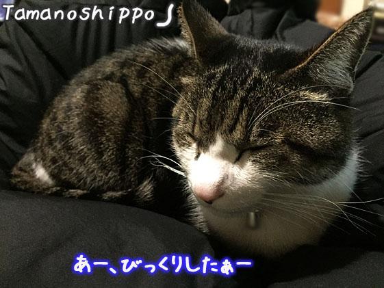 びっくりして目を細める猫(ちび)