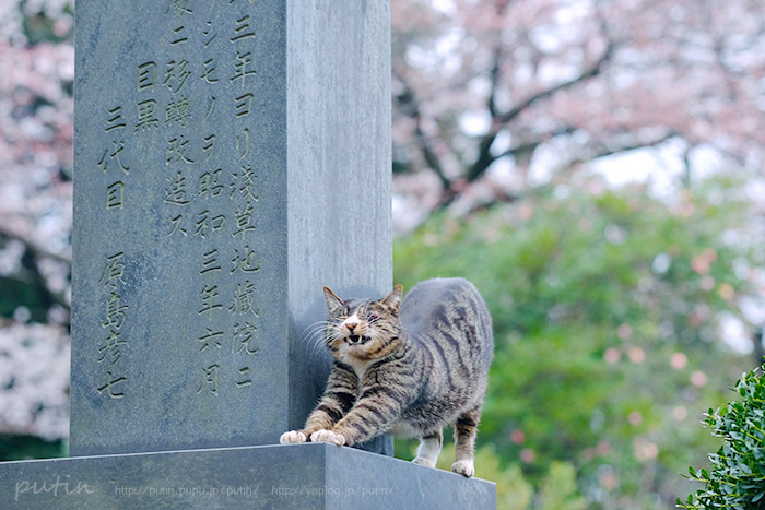 nekoyuhi_putin_owner164901603852.jpg
