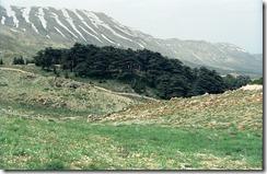 【世界の快道でイク!レバノン編】麗しき『神の杉の森』の精霊たち01