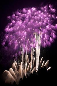 紫の花火その2