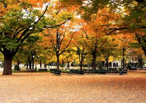 秋の大通公園でっす