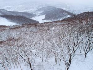 冬の藻岩山
