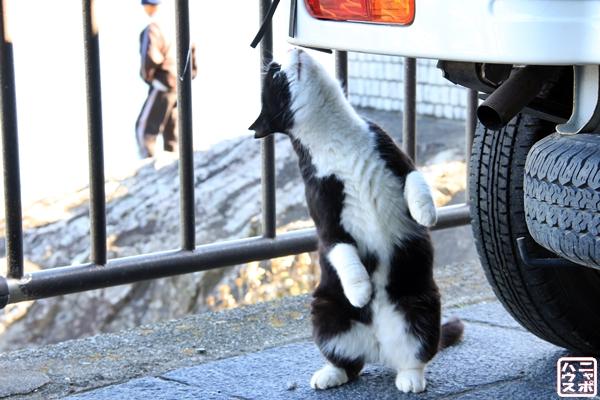 シロクロ猫 伊豆