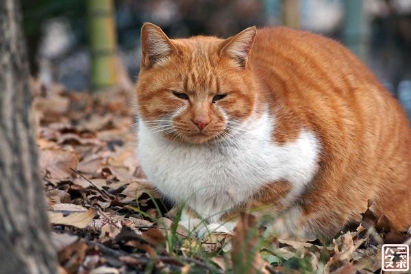 まるまるチャトラ猫