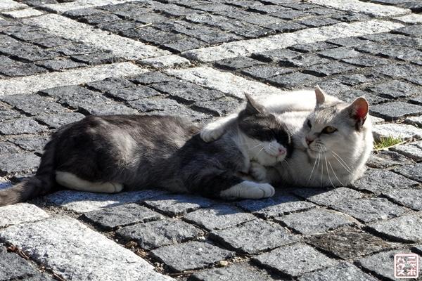猫 ジャレあい