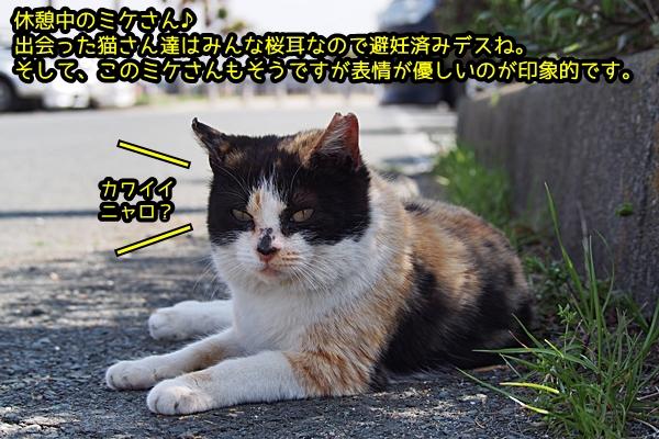 ニャポ旅18 新居 猫