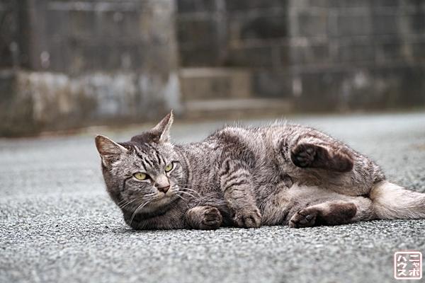 ニャポ旅 伊豆下田 猫