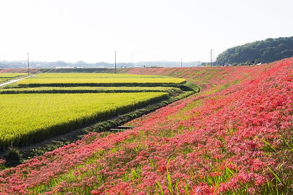 矢勝川-2