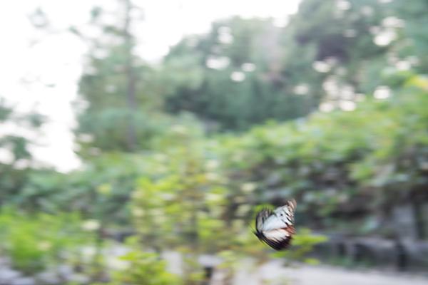 東山植物園-11