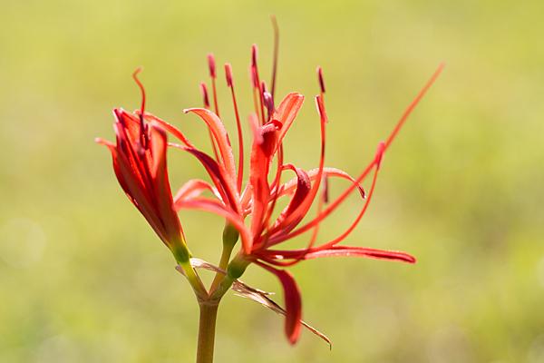 花と虫-3