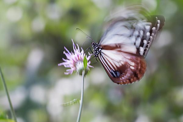 花と虫-5