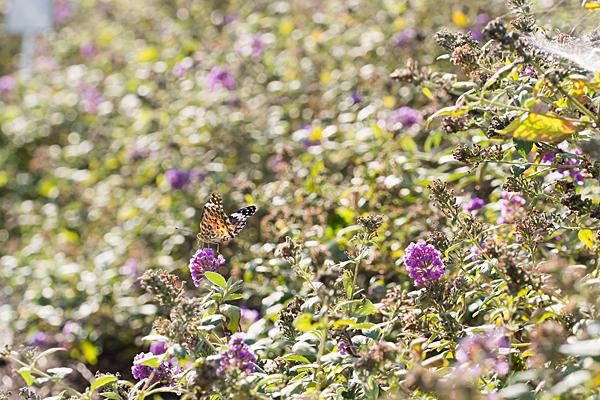 花と虫-7