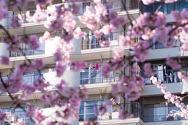 ベランダ風景と桜の季節