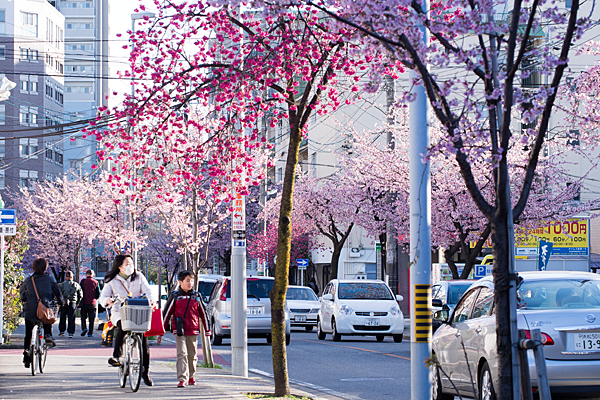桜並木と親子