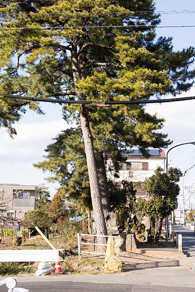 松の木と旧街道の社