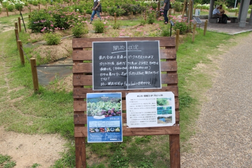 蜻蛉池公園あじさい園