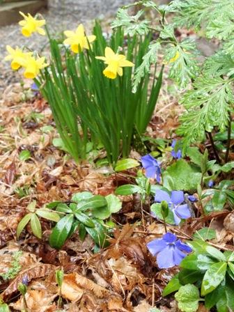 my-garden 072 (2)