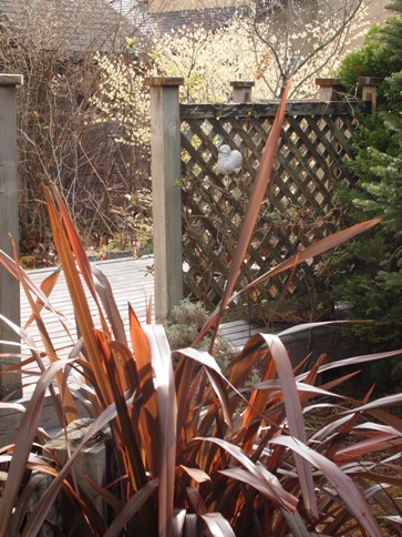 my-garden 029 (2)