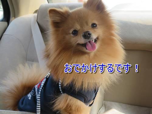 s-IMG_7104.jpg