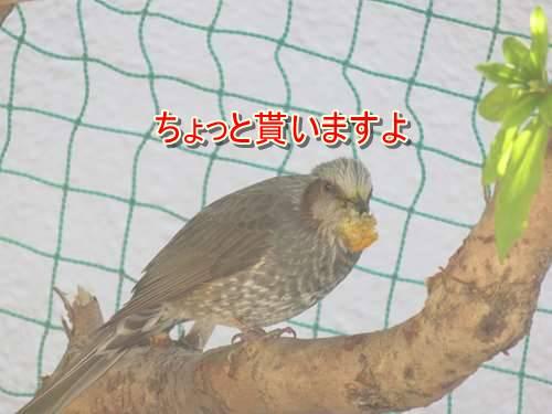 s-IMG_7630.jpg