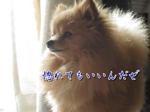s-s-IMG_7365.jpg