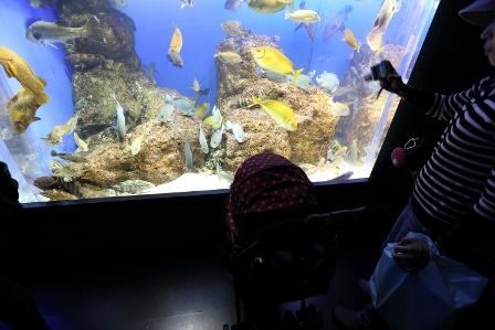 鳥羽旅行水族館2
