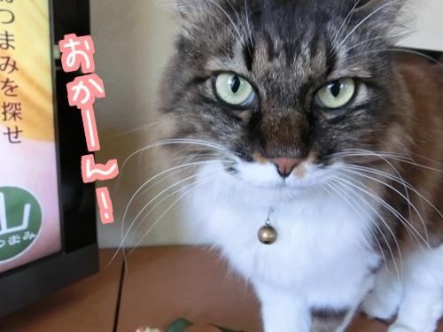 猫フィギュア~6