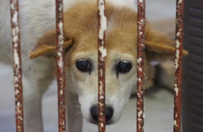宮崎犬管理所15-12-02-001