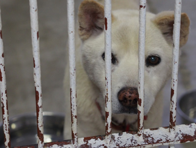 宮崎犬管理所15-12-02-003