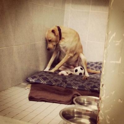sad-shelter-dog.jpeg
