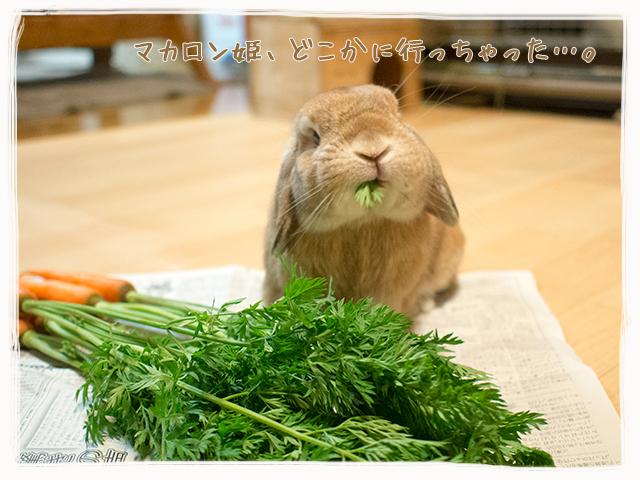 cookieblo1511144.jpg