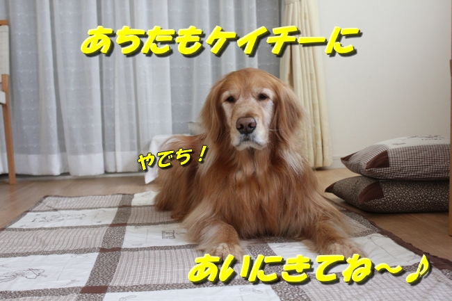 20160316125059beb.jpg