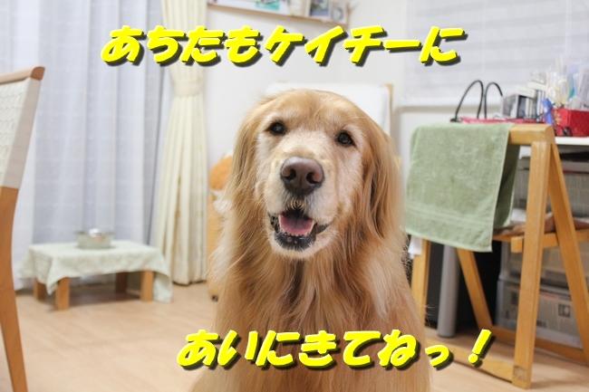20160402222843e14.jpg
