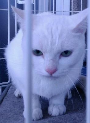 白猫探し 1443003637397