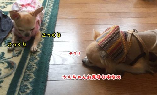 IMG_3795.jpg