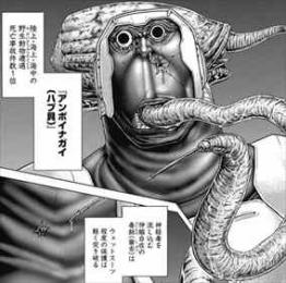 テラフォーマーズ11巻 アンボイナガイ
