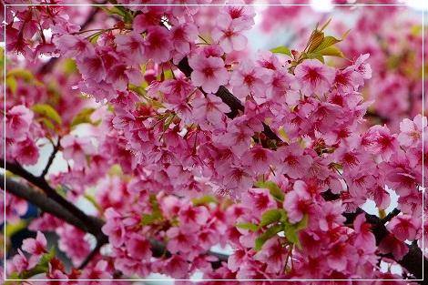 桜餅・・・食べたくなるね^m^