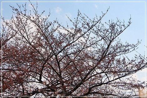 桜、全然咲いてなかったけど・・・