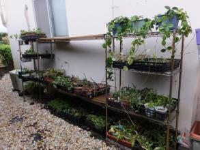 寒さに弱い観葉植物を室内から屋外に出しました。2016.04.05