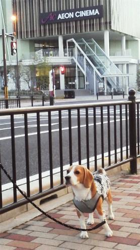 日曜日の朝,のんびりと散歩できました。