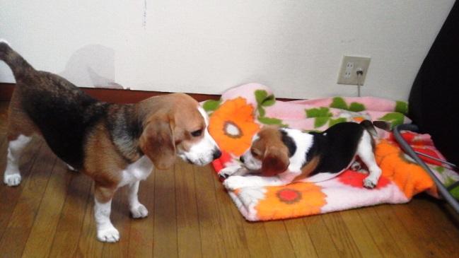 勤務疲れで帰宅した後,いつもTARO&JIROに癒されているパパママです。