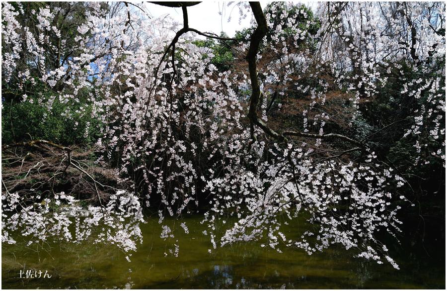 京都御苑5
