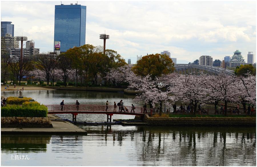 大阪城 桜1