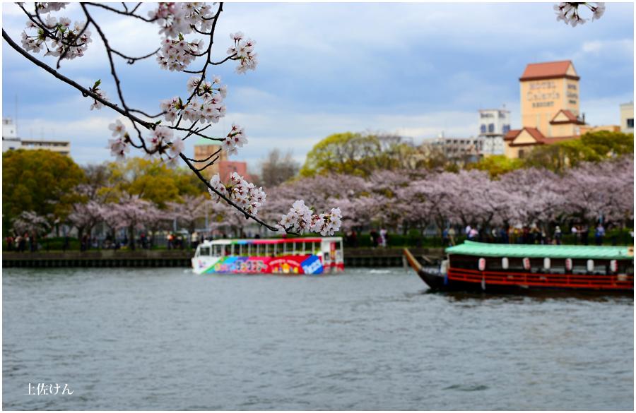 大阪城 桜2