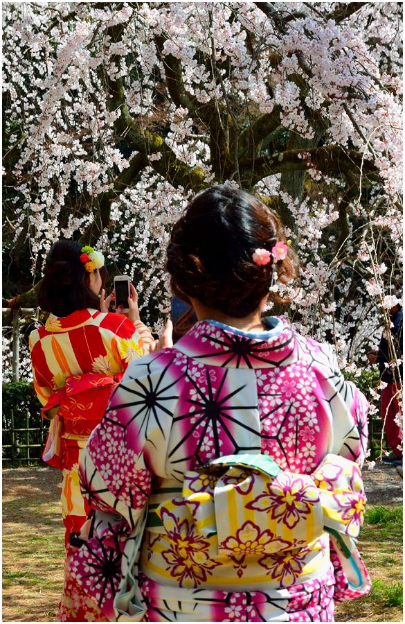 京都御苑・助手3
