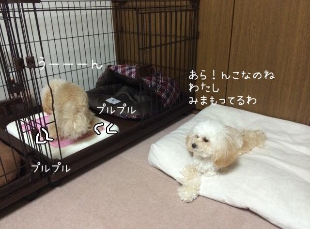 2015.10.26 おトイレ中モコ1